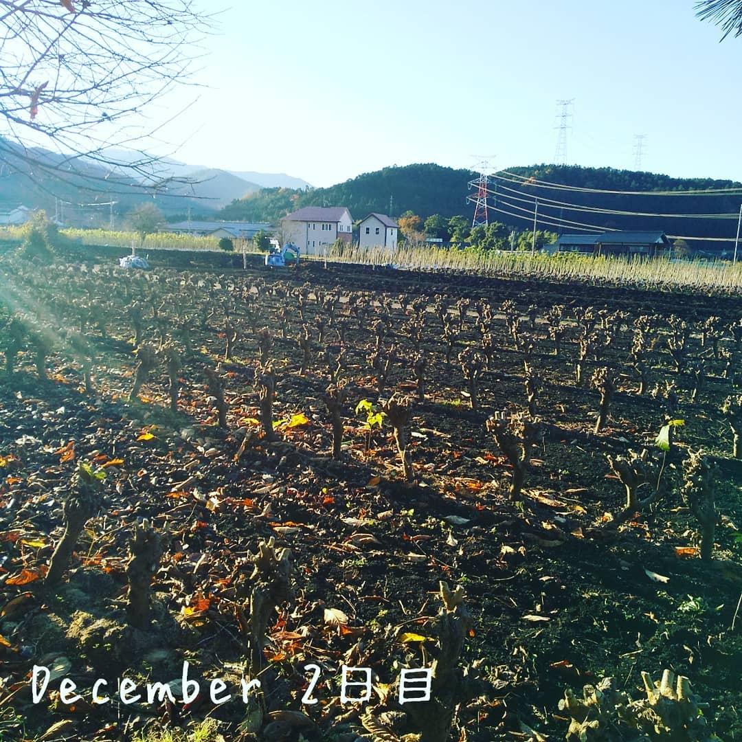 定点観測12/1 枝切りが終わって冬の風景になりましたOrganic農園『永源寺マルベリー』のホームページはこちら️https://eigenji-mulberry.com#永源寺マルベリー#オーガニック#薬用植物#桑#明日葉#モリンガ#オーガニック好きな人と繋がりたい#organic#mulberry#organic farm#健康志向の人と繋がりたい #耕作放棄地活用 #健康#美容と健康#ポリフェノール#糖尿病#血糖値#桑摘み#サスティナブル#桑畑#冬