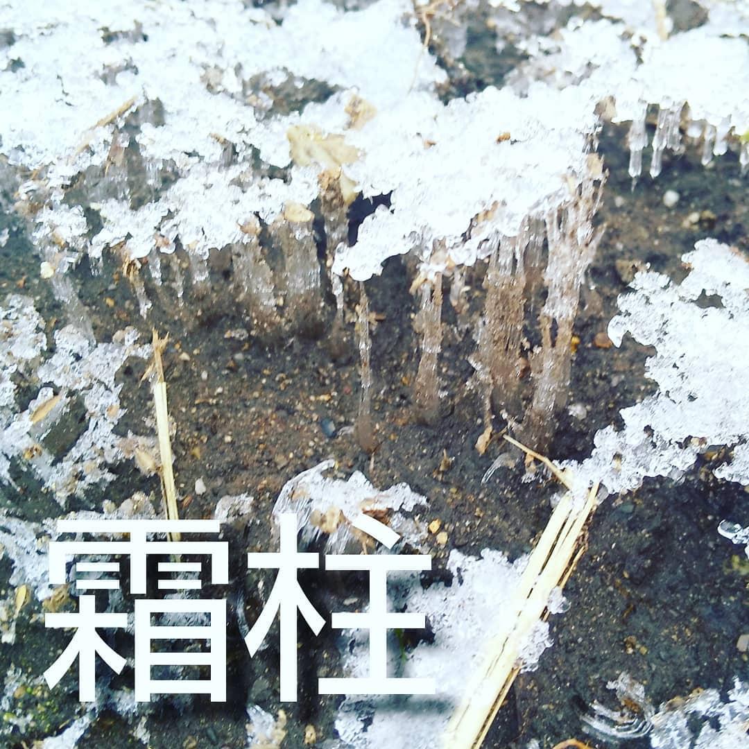"""霜柱とは気温が氷点下になったとき、土中の水分が地表に出てきて凍ったもの小学生の頃、国語の時間に習った詩(たぶん)に""""霜柱""""が出てきたことがありました。冬の朝、霜柱を踏んだらザクザクと音がするのが面白い、、とかいう内容だったのですが、全く理解できませんでした。生まれ育ったのは暖かい地域で雪も滅多に降らないし、ましてや霜柱なんて見たこともない、ナンノコト?キョトンとする子どもたちに先生は一生懸命、霜柱の説明をしていたけど、ピンと来ないまま授業は終わりました。その謎が何十年ぶりに溶けました️Organic農園『永源寺マルベリー』のホームページはプロフィールに記載しているURLからどうぞ!#永源寺マルベリー#オーガニック#薬用植物#桑#明日葉#モリンガ#オーガニック好きな人と繋がりたい#organic#mulberry#organic farm#健康志向の人と繋がりたい #耕作放棄地活用 #健康#美容と健康#ポリフェノール#糖尿病#血糖値#桑摘み#サスティナブル#霜柱"""