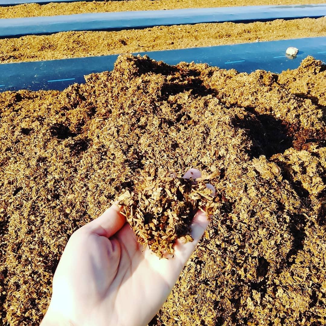 永源寺マルベリーでは、植物の栽培に馬ふんを活用しています。滋賀県にはJRA日本中央競馬の調教施設「栗東トレセン」があり、2000頭を超える競走馬が厩舎で暮らしています。ひづめを守るために敷かれたウッドチップと混ざった馬ふんは完全発酵して匂いもなくサラサラ。畝間や植物の根元に敷いて雑草が生えるのを抑えています。又、景観的にも美しく、作業を終えた畑はほれぼれとします。#永源寺マルベリー#オーガニック#薬用植物#桑#桑茶#オーガニック好きな人と繋がりたい#organic#mulberry#organic farm#健康志向の人と繋がりたい #耕作放棄地活用 #健康#美容と健康#ポリフェノール#糖尿病#血糖値#桑摘み#サスティナブル#菜の花