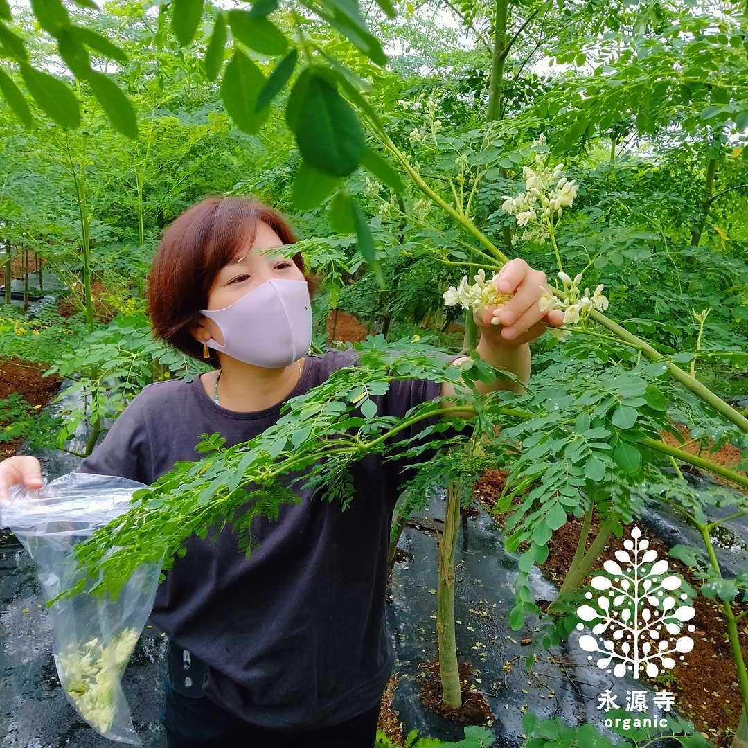 モリンガの花摘み今日は農園見学をきっかけに仲良くなったアロマの先生が来園して下さいました目的はモリンガフラワーの香り成分抽出などなど、各種実験🧪まずモリンガを摘みまくりつづく楽天出店中「永源寺organic」で検索を!滋賀WEB物産展の30%OFFクーポン配布中🎟数がそろそろ少なくなってきてるのでお早めに滋賀県WEB物産展【開催期間】9月1日(水)10:00〜9月31日(木)9:59まで【クーポン内容】・対象商品に使える30%OFFクーポン・利用回数上限 先着30,000回・クーポンはお一人様10回、1注文あたり3個までご利用頂けます。#桑茶#桑パウダー#明日葉茶#明日葉パウダー#モリンガ茶#モリンガパウダー#オーガニック青汁#滋賀県産#近江ハーブ#OMI HERB#薬草#オーガニック青汁#デトックス#アンチエイジング#オーガニック#スーパーフード#薬用植物#永源寺organic#無農薬#有機栽培#楽天#滋賀WEB物産展#美容と健康#ポリフェノール#糖尿病#血糖値#健康茶